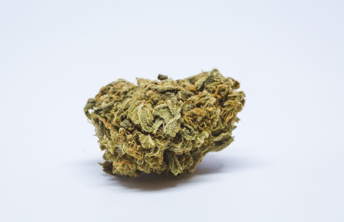 Sunset Sherbet Strain of Marijuana   Weed   Cannabis   Herb