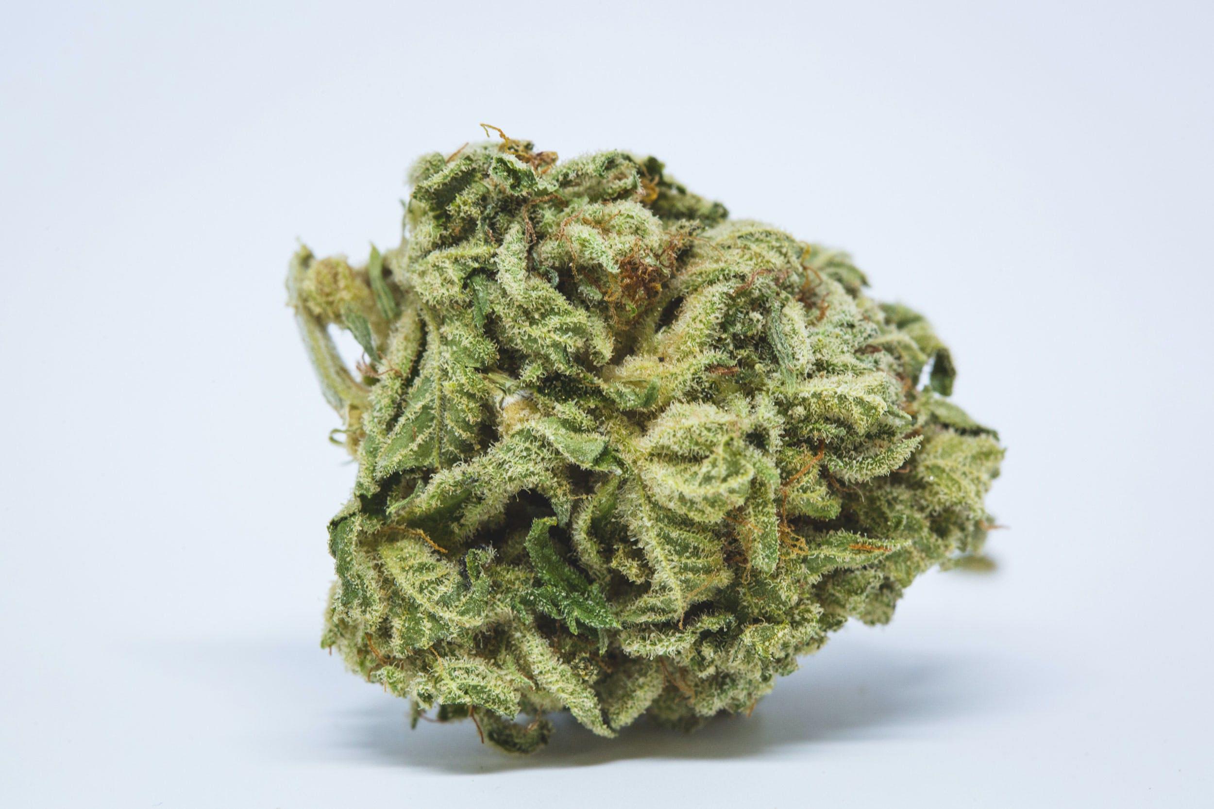 Big Bud Weed; Big Bud Cannabis Strain; Big Bud Indica Marijuana Strain