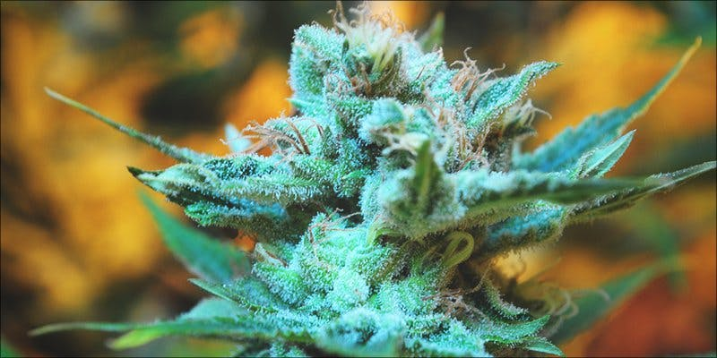 Cannabis Injury 4 To Put It Bluntly, You Need To Watch This New Women & Weed Show