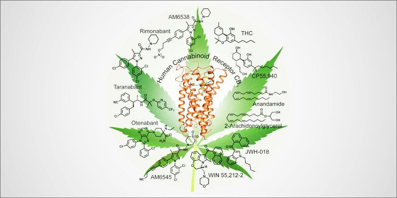 Cell Receptor 1 To Put It Bluntly, You Need To Watch This New Women & Weed Show