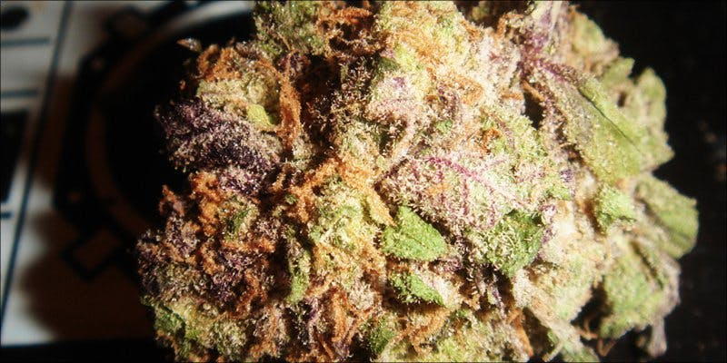 Granddaddy Purple 1 African Americans At Greatest Risk For Cannabis Arrests