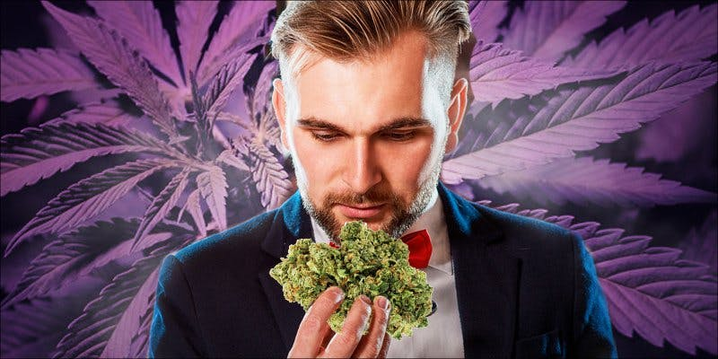 Cannabis Sommelier