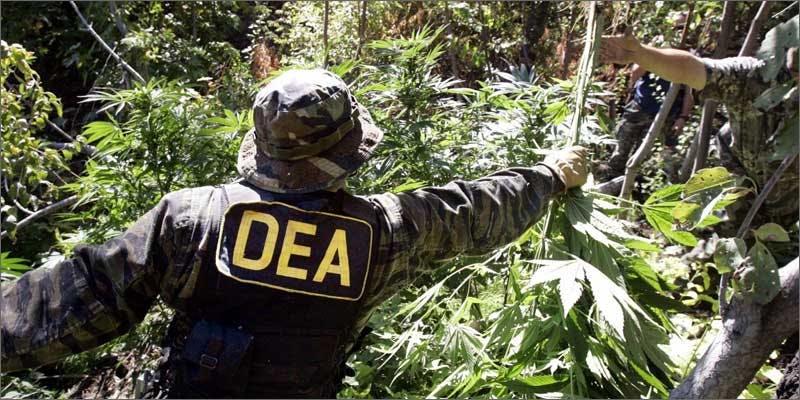 Eradicate Cannabis Plants