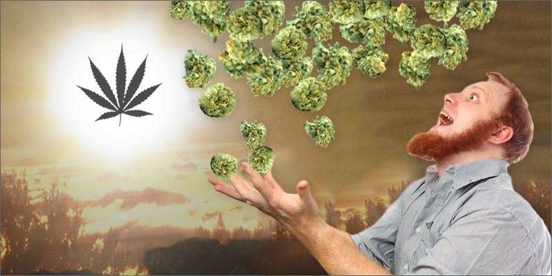 Win Free Weed
