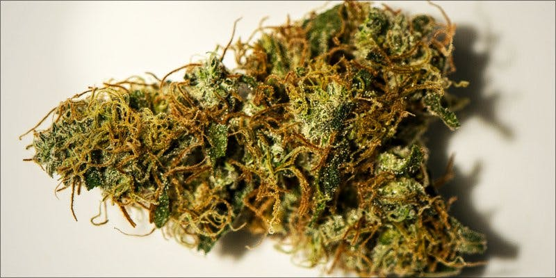 7topstrains thanksgiving 1 Minnesota Adds PTSD To Medical Cannabis Conditions
