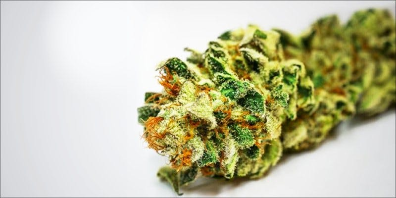 7topstrains thanksgiving 4 Minnesota Adds PTSD To Medical Cannabis Conditions