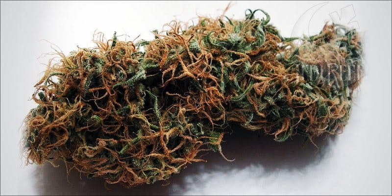 7topstrains thanksgiving 6 Minnesota Adds PTSD To Medical Cannabis Conditions