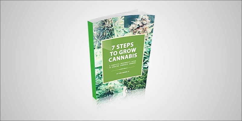 A Beginners Guide 2 Minnesota Adds PTSD To Medical Cannabis Conditions