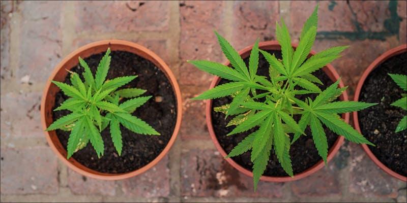 Mr. Grow It
