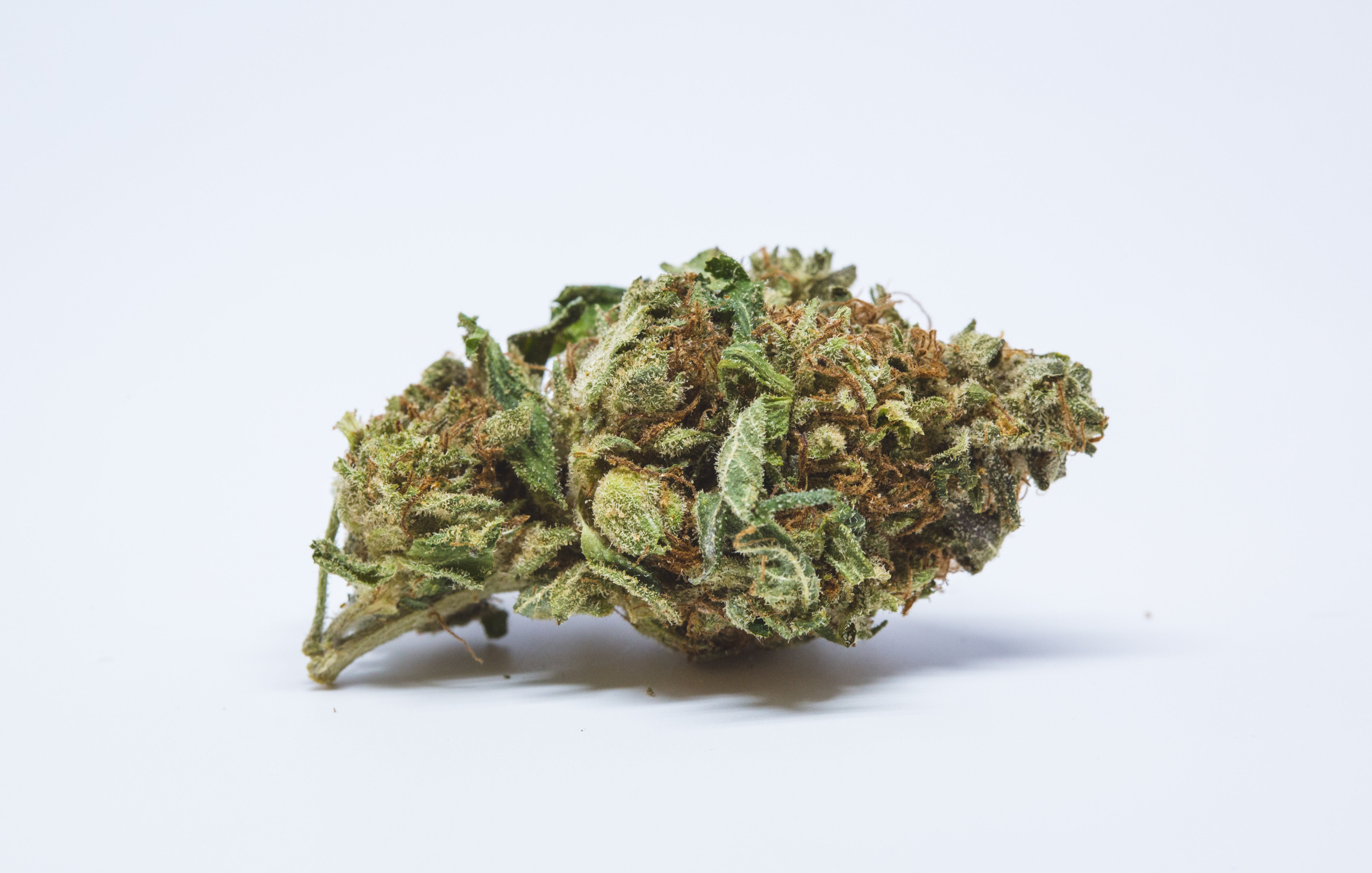 Blackwater Marijuana Strain