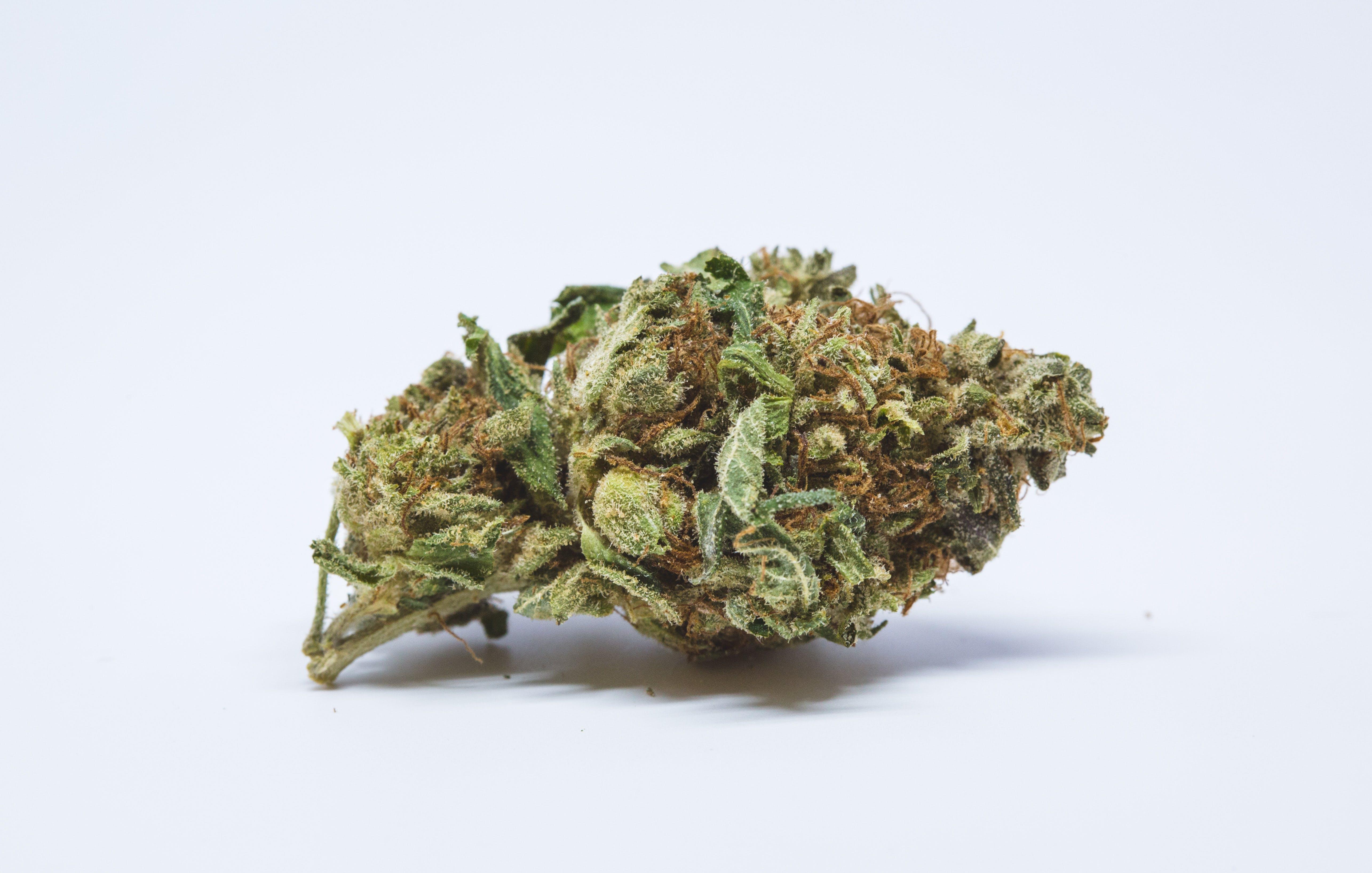 Blackwater Marijuana Strain