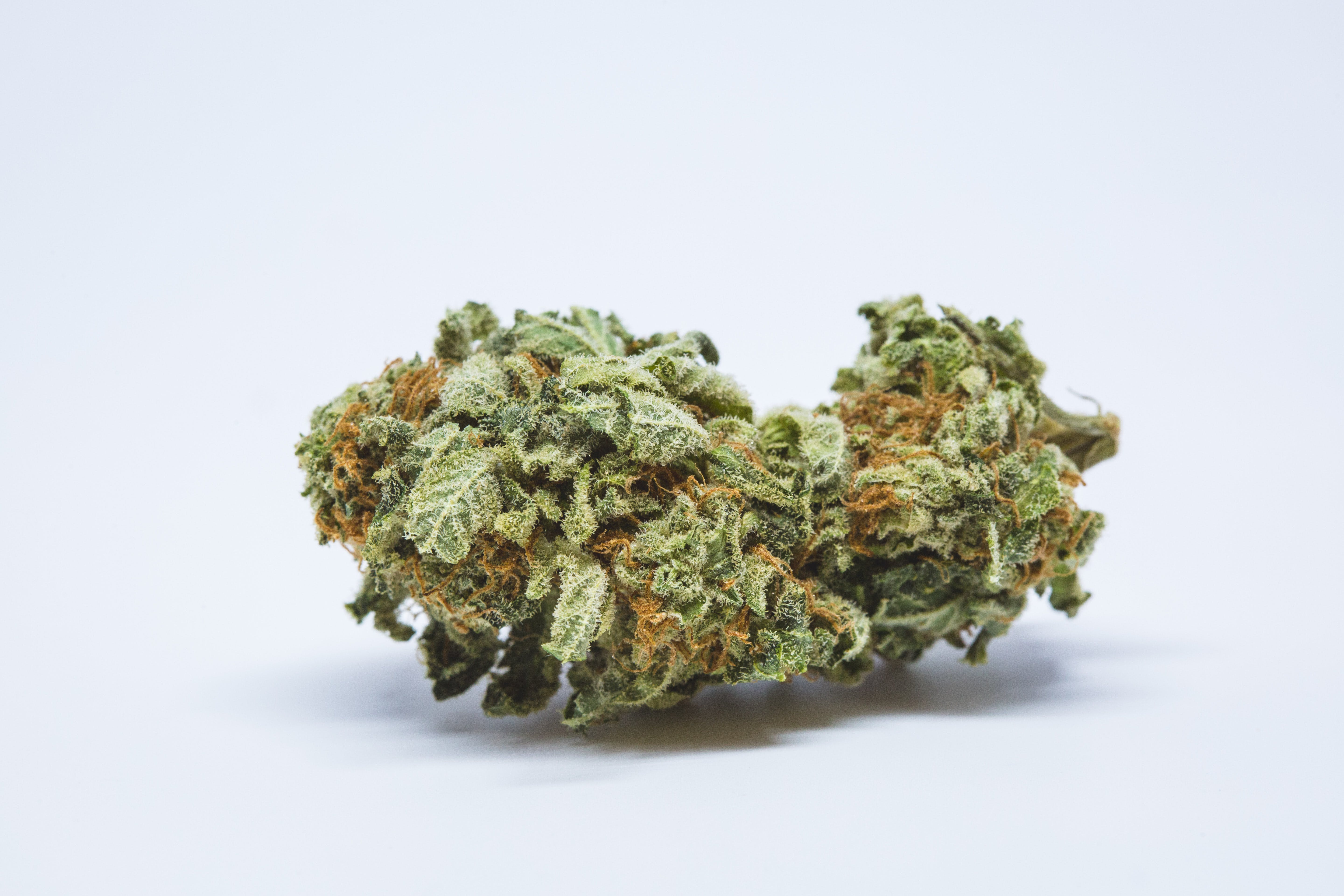 Moby Dick Weed; Moby Dick Cannabis Strain; Moby Dick Sativa Marijuana Strain