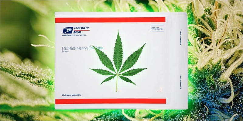 Are Postal Workers 1 This Machine Grows Weed For You & Sends You A Text When Its Ready