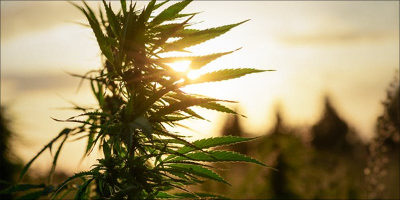 As More States 3 Why Are Cannabis Users Increasingly Being Denied Gun Rights?
