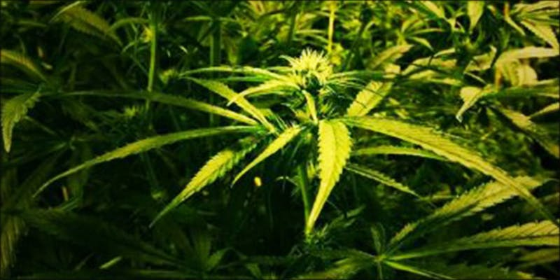 Catholic Church Gives 1 The Californian Tax Glitch Is Great News For Medical Cannabis Patients
