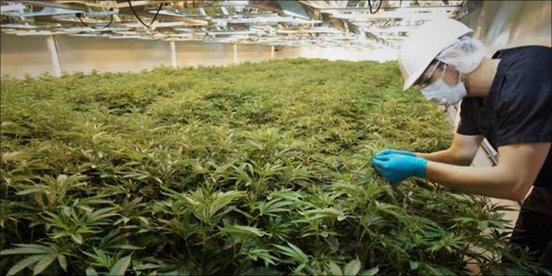 Former AG Its 2 This Machine Grows Weed For You & Sends You A Text When Its Ready