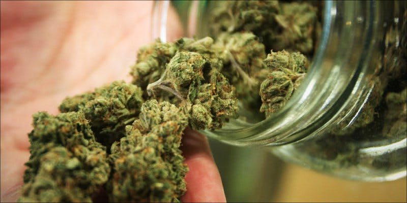 Great Day for Cannabis 1 Why Are Cannabis Users Increasingly Being Denied Gun Rights?