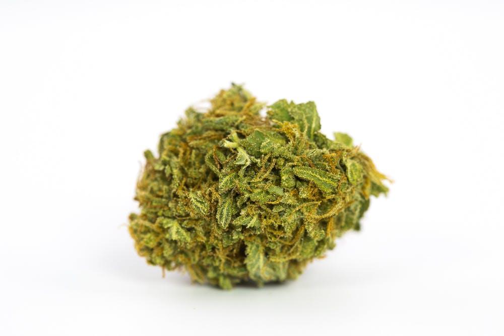 Great White Shark Weed; Great White Shark Cannabis Strain; Great White Shark Sativa Marijuana Strain