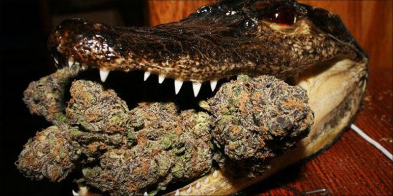 How Did Florida 4 The Californian Tax Glitch Is Great News For Medical Cannabis Patients