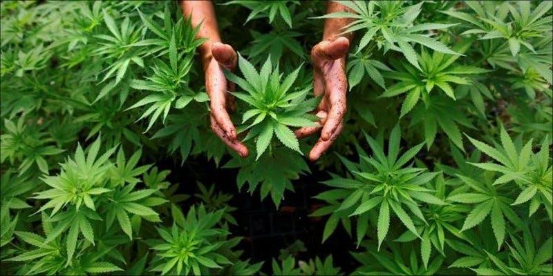 Israeli Companies 1 Minnesota Adds PTSD To Medical Cannabis Conditions