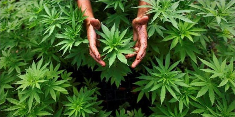 Israeli Companies 1 Groundbreaking New Medical Cannabis Inhaler to Be Released