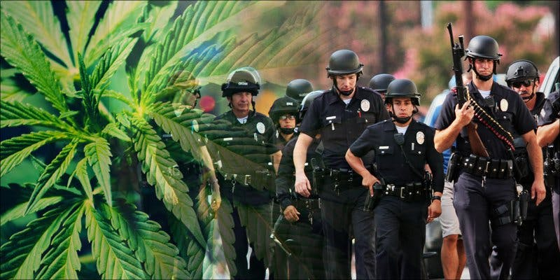 Prohibition-Style Cannabis Crackdown