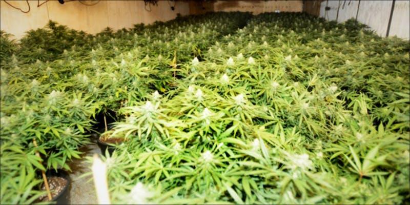 Medical Marijuana Is 3 Minnesota Adds PTSD To Medical Cannabis Conditions