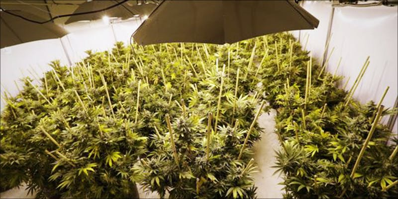 Newark To Ignore 3 The Californian Tax Glitch Is Great News For Medical Cannabis Patients