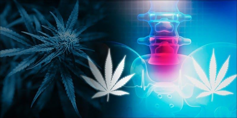 GreenLight Medicines