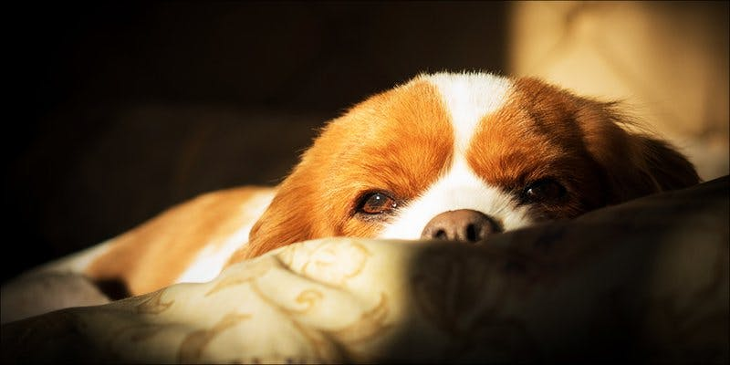 Reform For Dogs 2 Minnesota Adds PTSD To Medical Cannabis Conditions