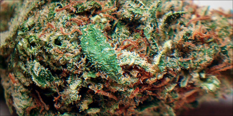 Romulan A Mind 1 Why Are Cannabis Users Increasingly Being Denied Gun Rights?