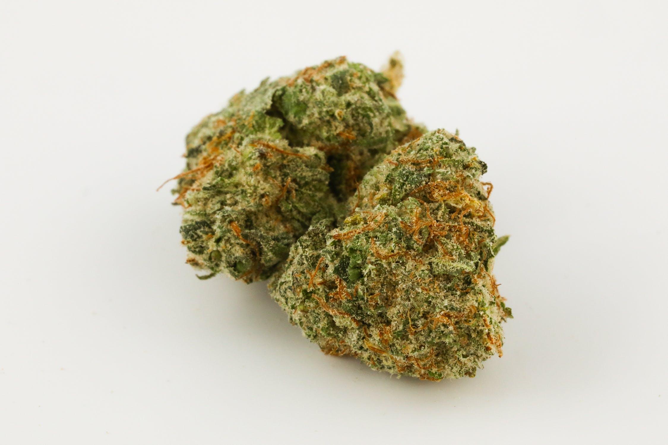 G-13 Haze Weed; G-13 Haze Cannabis Strain; G-13 Haze Hybrid Marijuana Strain