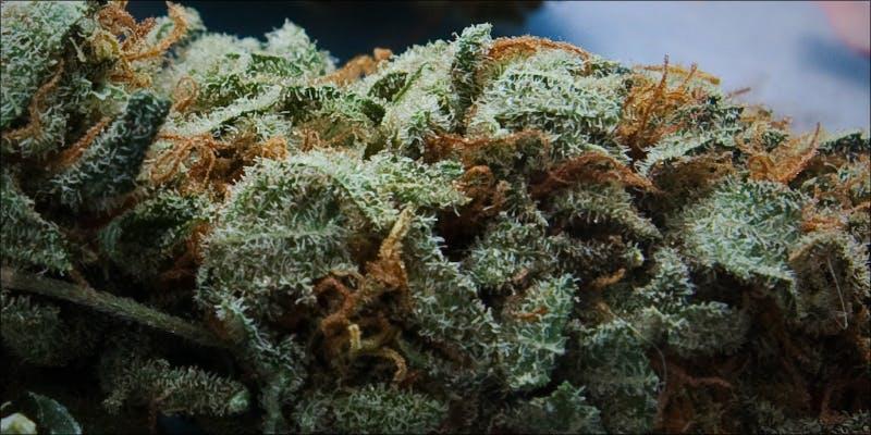 10 Best Sativas 10 Will Cannabis Be Seen As Medicine Under New International Law?