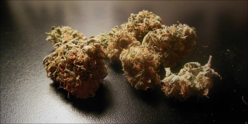 10 Best Sativas 7 Will Cannabis Be Seen As Medicine Under New International Law?