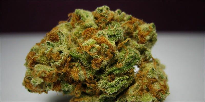 10 Best Sativas 8 Will Cannabis Be Seen As Medicine Under New International Law?