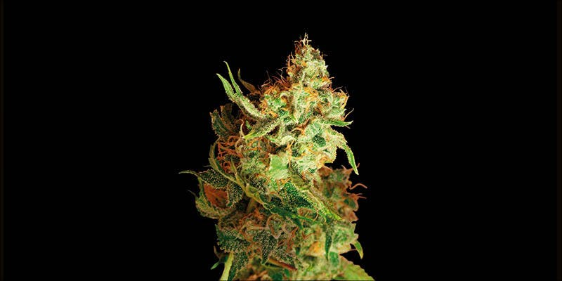 10 New Strains 7 Will Cannabis Be Seen As Medicine Under New International Law?