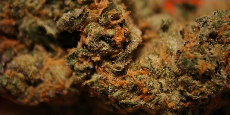 10 New Strains 9 Will Cannabis Be Seen As Medicine Under New International Law?