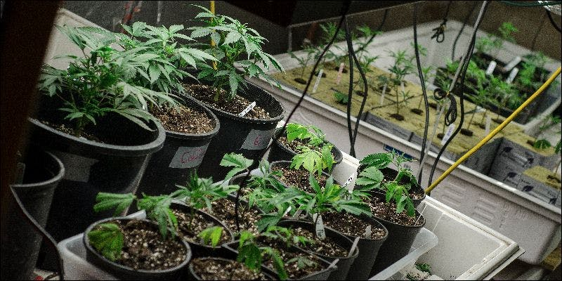 12161016866 69e44b11e7 o New Police Survey Has Surprising Results About Legalization