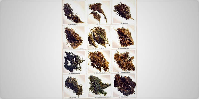 7 Ways To 2 Will Cannabis Be Seen As Medicine Under New International Law?