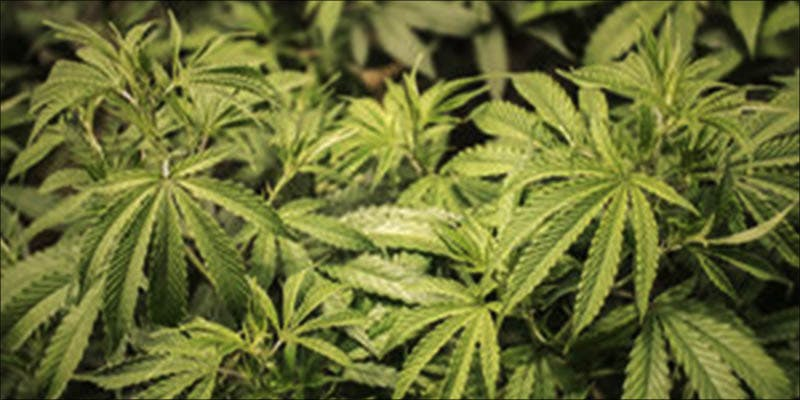 AFTER STATE LEGALIZES 3 Will Cannabis Be Seen As Medicine Under New International Law?
