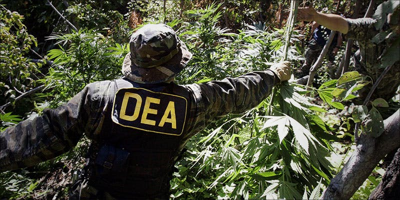 DEA Laments That 2 Cannabis Cultures Montreal Dispensaries Raided 24 Hours After Opening