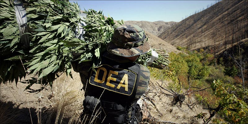 Denver Law Firm 1 New Police Survey Has Surprising Results About Legalization