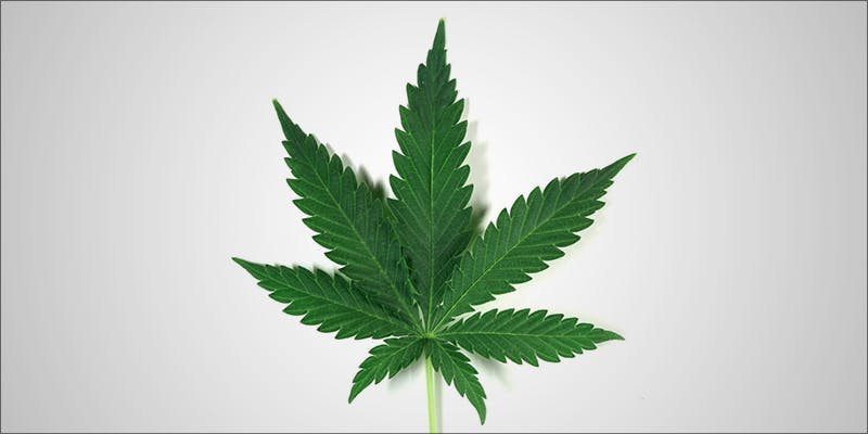 Does Anyone Need 1 Will Cannabis Be Seen As Medicine Under New International Law?