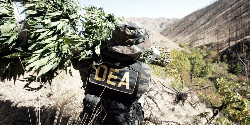 cannabis couriers
