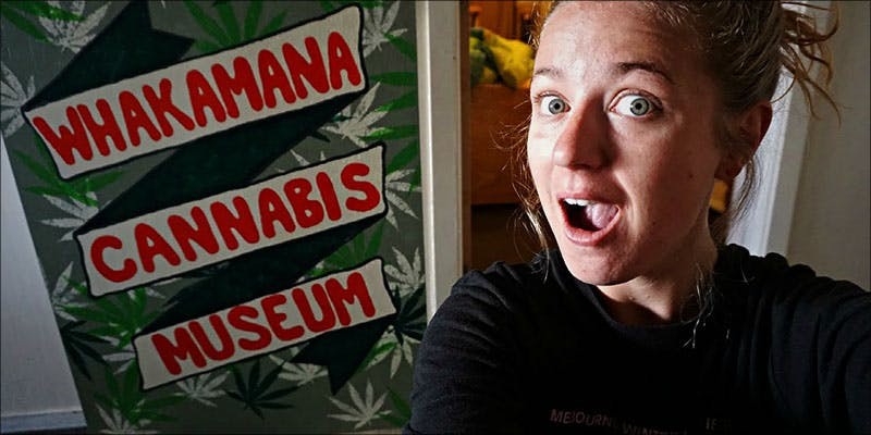 New Zealand Cannabis 5 New Police Survey Has Surprising Results About Legalization