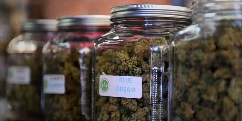 PTSD Now Qualifies 2 This Machine Grows Weed For You & Sends You A Text When Its Ready