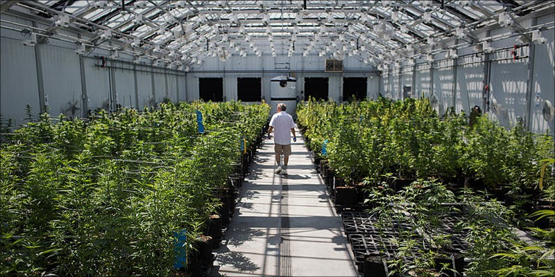 PTSD Now Qualifies 3 Minnesota Adds PTSD To Medical Cannabis Conditions