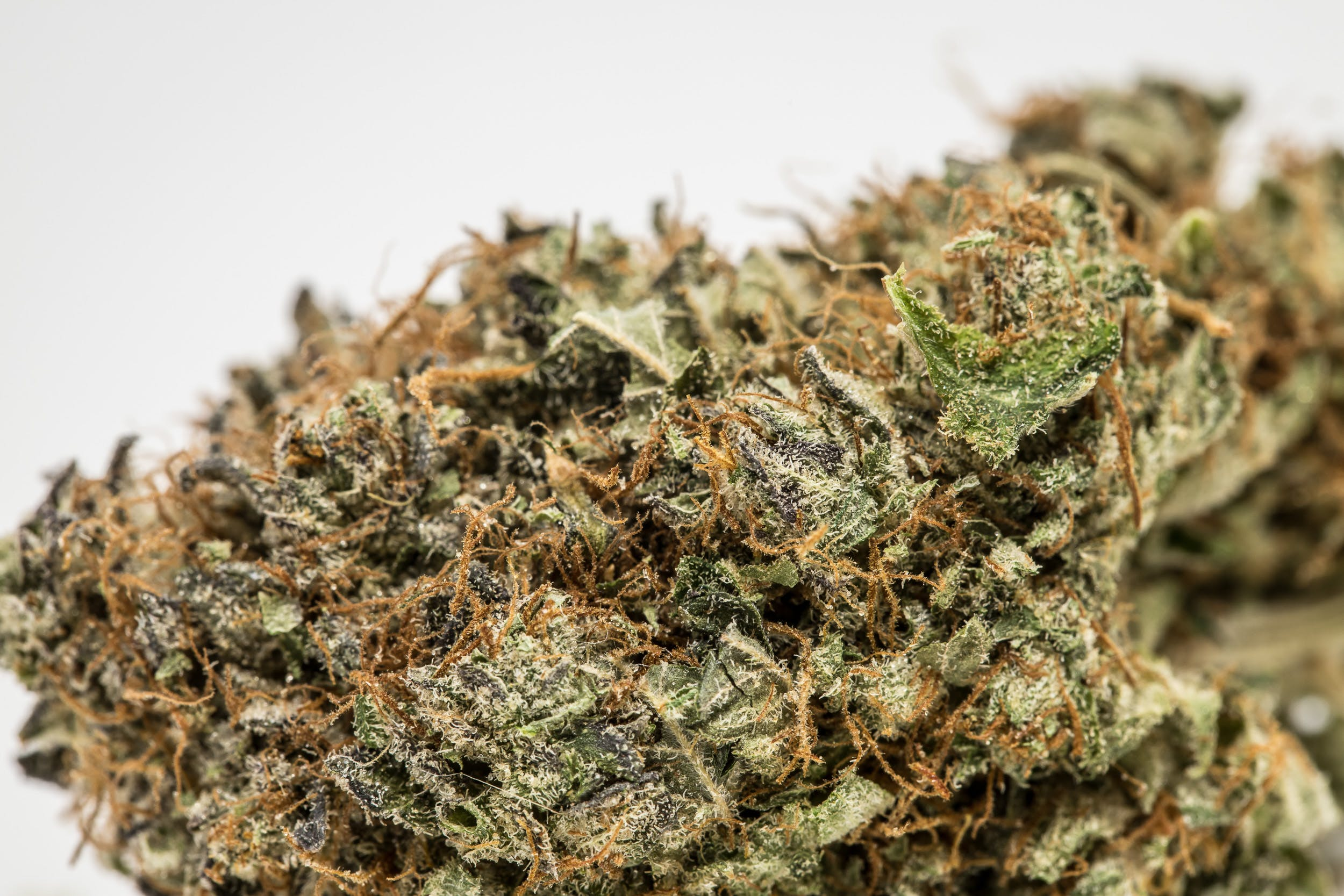 Mendo Breath Weed; Mendo Breath Cannabis Strain; Mendo Breath Indica Marijuana Strain