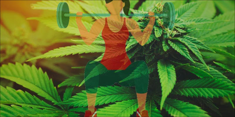 Taking A Drug 2 Will Cannabis Be Seen As Medicine Under New International Law?