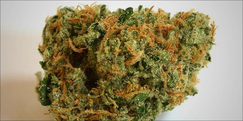 Top 10 Best 9 Will Cannabis Be Seen As Medicine Under New International Law?